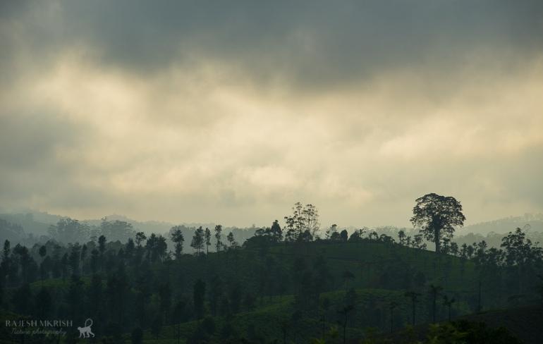 Monsoon mood at Valparai